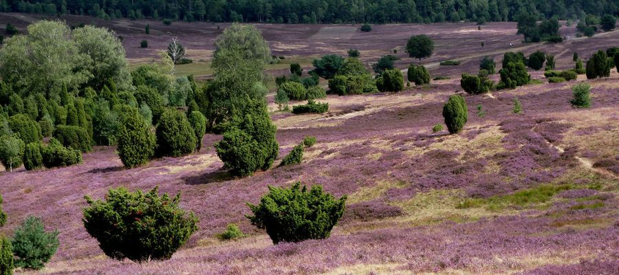 Die Lüneburger Heide – Wildromantik pur